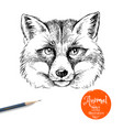 hand drawn sketch fox head isolated cute vector image