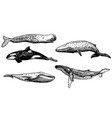 ink hand drawn whale icon set vector image vector image