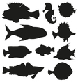 set fishes isolated on a white backgrounds vector image