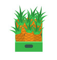 shelf with pineapples in supermarket grocery store vector image vector image