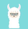alpaca llama animal face in sun glasses cute vector image