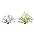 bush with leaves and without on white background vector image vector image