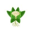 Fresh Cauliflower Primitive Realistic vector image