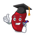 graduation spleen character cartoon style vector image vector image
