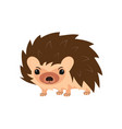 hedgehog on white vector image vector image