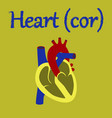 human organ icon in flat style heart vector image vector image