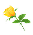 rosebud yellow rose twig with leaves on a white vector image vector image