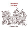 sketch buns and cakes and spices desserts vector image