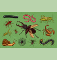 big set of insects vintage pets in house bugs vector image vector image