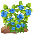 blue flowers with leaves on white background vector image vector image