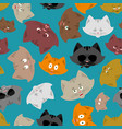 cat head pattern pet background ornament face vector image vector image