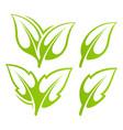 green leaf set vector image
