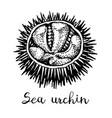 ink sketch urchin vector image