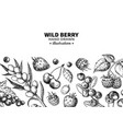 wild berry drawing hand drawn vintage vector image vector image