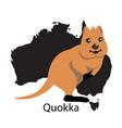 quokka animall of australia vector image