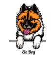 elo dog - dog breed color image a dogs head vector image vector image