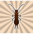 Insect anatomy Sticker Forficula auricularia vector image vector image