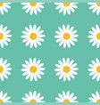 seamless pattern white daisy chamomile flower vector image vector image