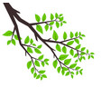background tree branches tree branch with leaves vector image
