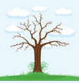 big beautiful tree vector image vector image
