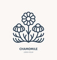chamomile flat line icon medicinal plant daisy vector image vector image