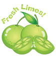 fresh limes on white background vector image