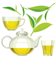 Green tea leaves tea cup glass vector image