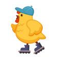 plump chicken in blue cap on walk in roller-skates vector image vector image