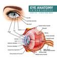 realistic eye anatomy infographics vector image
