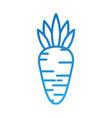 vegetable carrot harvest nutrition food vector image vector image