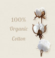 branch of cotton plant in flower vector image vector image