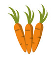 carrot vegetable vegetarian icon vector image vector image