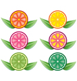 citrus slices vector image