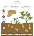 potato beneficial features graphic template vector image vector image