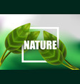 leaf leaves realistic green isolated plant nature vector image