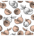 citrus fruit background citrus seamless pattern vector image