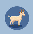 cute goat isolated farm vector image vector image