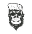 gorilla monkey in baseball cap design element for vector image