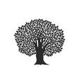 oak logo vector image vector image