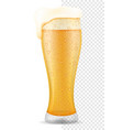beer in glass transparent stock vector image