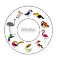 birds are different species vector image