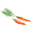 carrot logo design template vegetable or vector image vector image