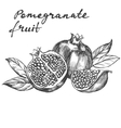 fruit pomegranate set hand drawn vector image vector image