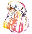 colorful decorative portrait of poodle vector image vector image