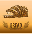 digital color detailed line art bread vector image