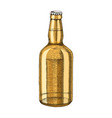 hand drawn beer bottle vector image vector image