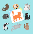 shorthaired cats cartoon cat vector image vector image