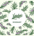 circular label decorated by rosemary sprig vector image