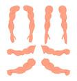 set a bodybuilder hands male muscular anatomy vector image