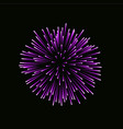 beautiful pink firework bright firework isolated vector image vector image